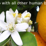 "orange blossom flower & orange fruit essential oil is distilled from the fresh orange peel, inspirational quote ""you are in partnership with all other human beings."" -Wayne W. Dyer"