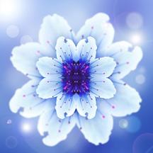 blue mandala flower chris mole design