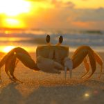 astrology-cancer-crab-pixabay-public-domain