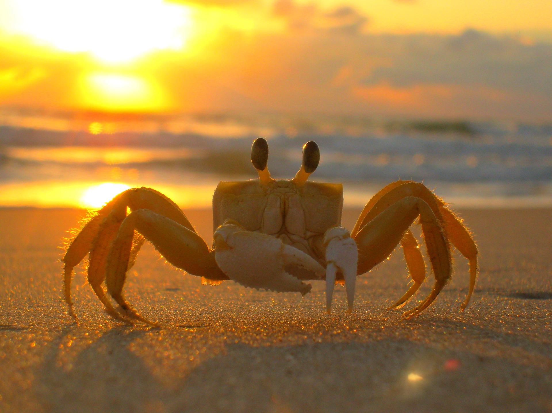 astrology-cancer-crab-pixabay-public-domain