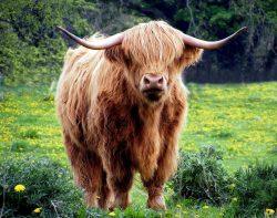 astrology-taurus-bull-pixabay-public-domain-431729_1920