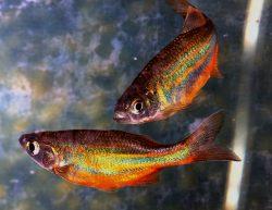astrology-pisces-fish-pixabay-public-domain