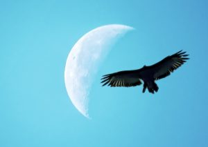 moon-quarter-day-pixabay-public-domain